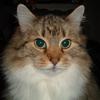 прошу помощи в настройке сервера ТС - последнее сообщение от kostya_kiev_ua
